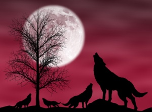 4wolves